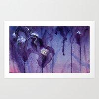 Iris, Blue And Purple Art Print