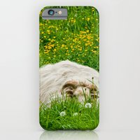 Sheep in the grass iPhone 6 Slim Case