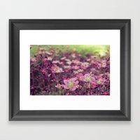 Pink Saxifrage Framed Art Print