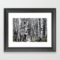 Aspen Trees With Subdued… Framed Art Print