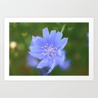 cornflower blue Art Print