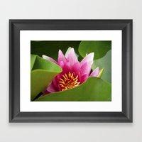 Water Lily IX Framed Art Print