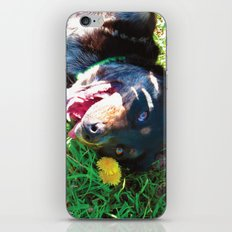 Dog Tanning iPhone & iPod Skin