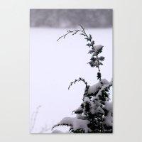 Winter Greens - Snow Canvas Print
