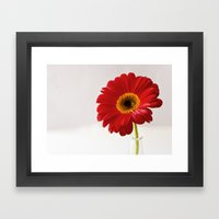 Red Gerbera Framed Art Print