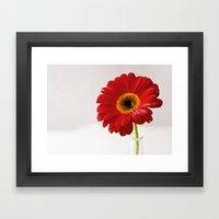 red gerbera Framed Art Print
