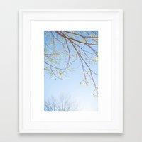 Spring Light. Framed Art Print