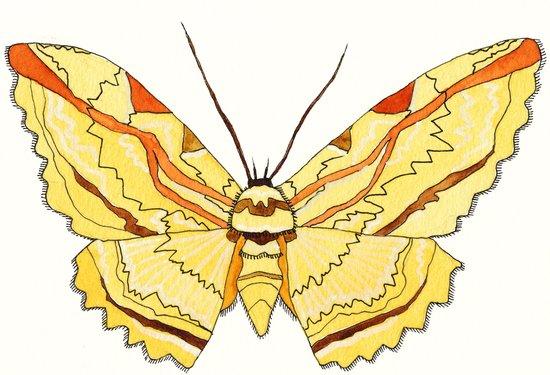owl moth Art Print