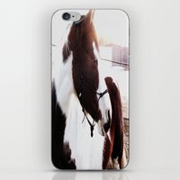 Paint Horse iPhone & iPod Skin