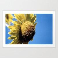 Bulging Sunflower Art Print