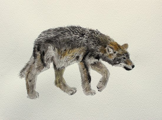 Wolf cub - Louveteau - Lobezno - Lobacho Art Print