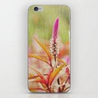 Sunday at the Arboretum: Purple iPhone & iPod Skin