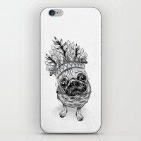 Indian Pug  iPhone & iPod Skin