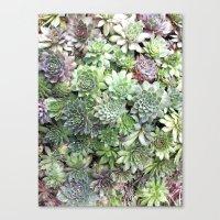 Desert Flower I Canvas Print