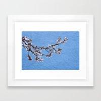 Blossom on Blue Framed Art Print