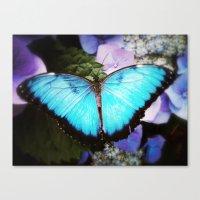 Morpho Bleu Canvas Print
