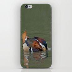 Mandarin Duck Reflection iPhone & iPod Skin
