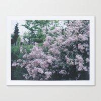 Korean Lilac Polaroid Canvas Print