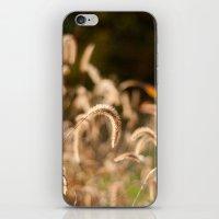 Autumn Light iPhone & iPod Skin