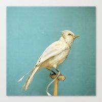 Albino Blue Jay - Square… Canvas Print