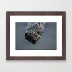 Beaver Shots Framed Art Print