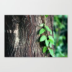 Wrinkles in Nature Canvas Print