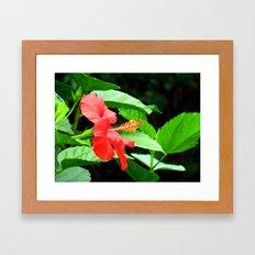 hibiscus profile Framed Art Print