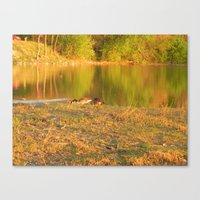 Evening Geese Canvas Print