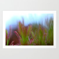 Fairy Like Sundew - JUST… Art Print