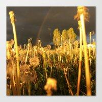 Rainbow Thunderstorm Sunset Through a Field of Dandelions Canvas Print