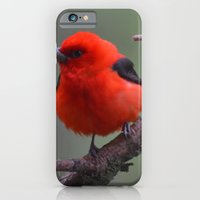 Scarlet Tanager - A Nature Art Print iPhone 6 Slim Case