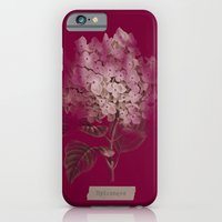 iPhone & iPod Case featuring HYDRANGEA 2 by mel @ my postcard heaven