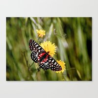 A Red Dotted Checkerspot Canvas Print
