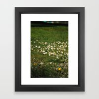 Dasies Framed Art Print
