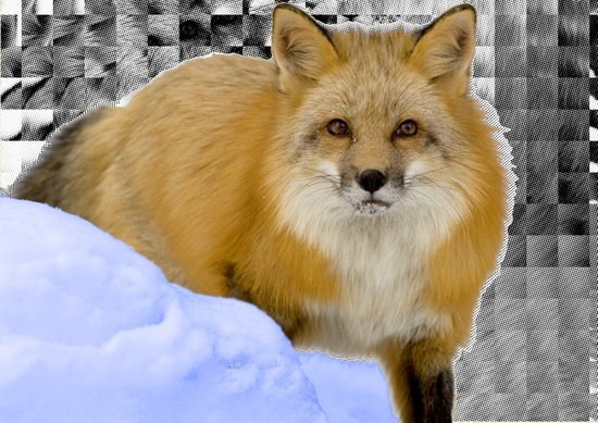 Fox Without Home Art Print