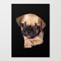 Puggle Canvas Print