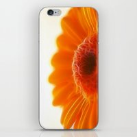 Orange Gerbera iPhone & iPod Skin