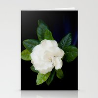 Gardenia in the garden - free shipping Stationery Cards