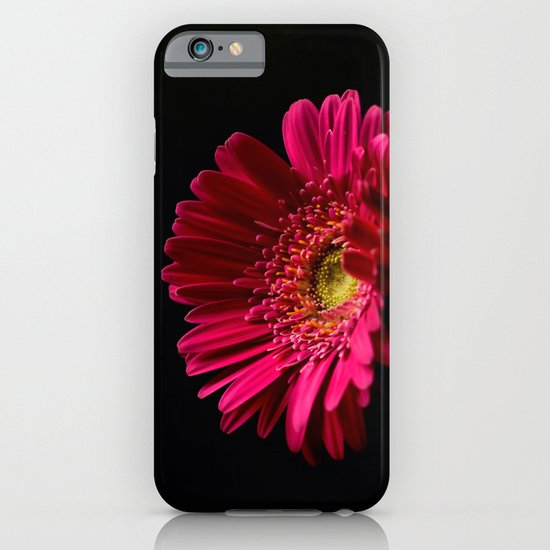 Pink Gerbera Daisy 2 iPhone & iPod Case