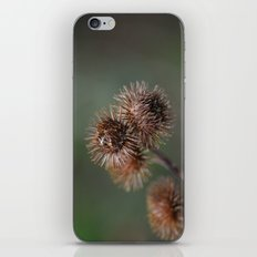 Piri Piri Burr iPhone & iPod Skin