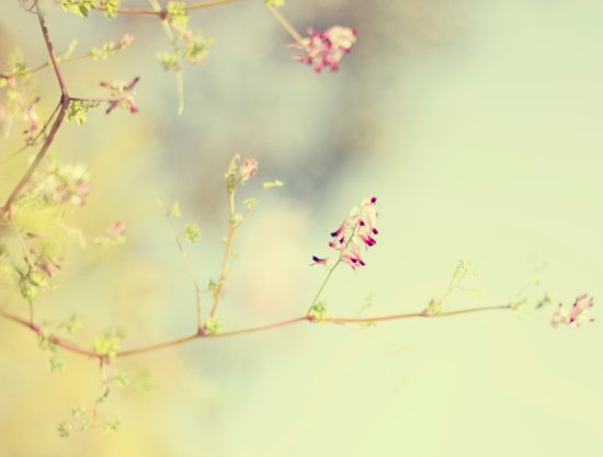 soft scent of spring Art Print