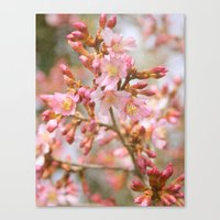 Blossom In The Spring Ti… Canvas Print