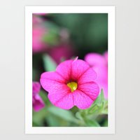 Pink & Yellow Flower I Art Print