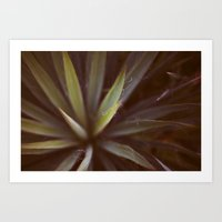 Yucca #1 Art Print
