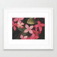 Magenta Flowers Framed Art Print