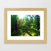 Sunshine Forest Framed Art Print
