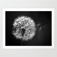 Dandelion In BW Art Print