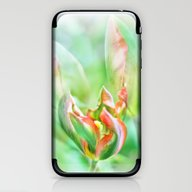 Tulip Garden iPhone & iPod Skin