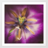 tulips star Art Print