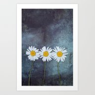 Three Marguerites Art Print
